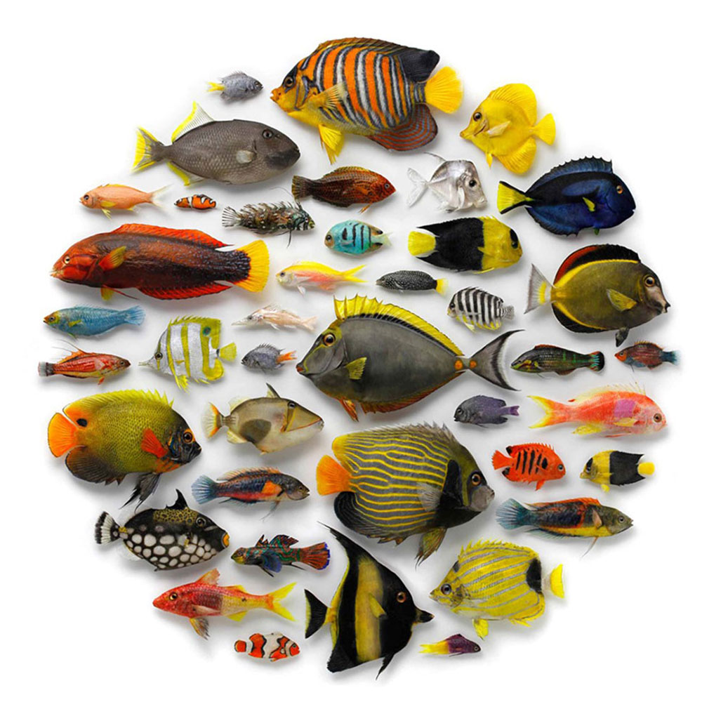 Wiener Museum Christopher Marley Biophilia Water Fish